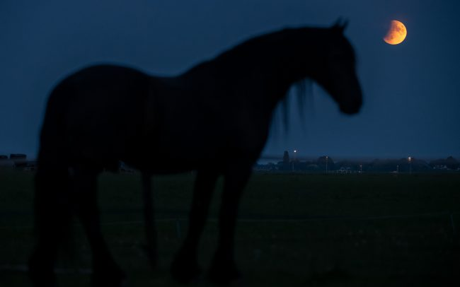 Frisian horse with lunar eclips, July 16th 2019